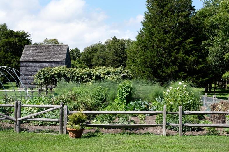 Dora's garden (2)